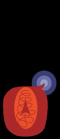 puntura medusa